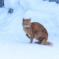 просто кошка,,, :: Александр