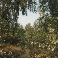 ЛЕТО :: Ольга НН