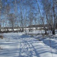 Мартовский денёк в лесу :: Владимир