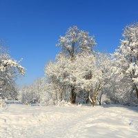 И еще немного зимы! :: ninell nikitina