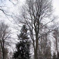 Зимний лес :: Агриппина