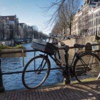 Главное транспортное средство в Амстердаме :: Nata_li В.