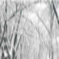 Холодные иллюзии. :: Андрий Майковский