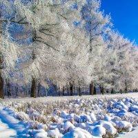 Зимний парк :: Дмитрий Рутковский