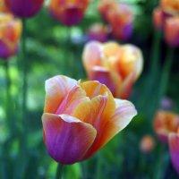 Весна близко ... :: Лариса Корженевская