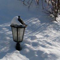 Зимние зарисовки :: Grey Bishop