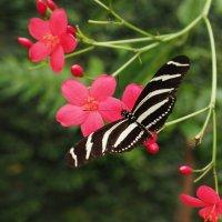 Бабочки из Бенальмадены :: Виталий Авакян