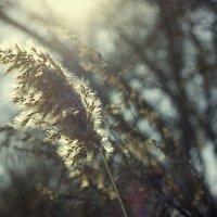 Тёплое зимнее солнце :: Оксана Сергеева