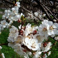 С мечтами о весне :: Нина Корешкова
