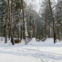 В пригородном лесу :: Милешкин Владимир Алексеевич