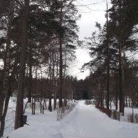 Зимняя красота :: Svetlana Lyaxovich