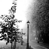 аллея тумана :: сергей швед
