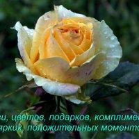 С Международным женским днём 8 марта! :: Пётр Сесекин