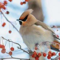 Сторож в яблоневом саду. :: Виктор Иванович