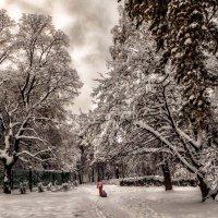 Прогулки по зимнему парку. :: Василий Ярославцев