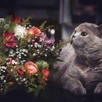 С Праздником 8 марта! :: Лилия .