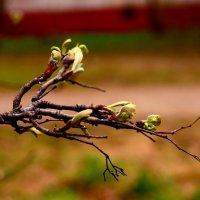 дыхание весны :: Наталья Сазонова