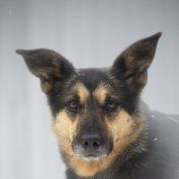 Собаки приюта :: Елена Волгина