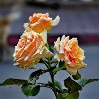 Поздравляю всех женщин с праздником 8 марта. :: Марина Волкова
