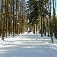 Дорожка  в  лесу :: Мила