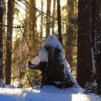 Осыпает снег с деревьев март :: Татьяна Ломтева