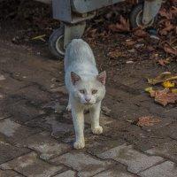 Бездомный кот. Турция. Город Кемер. :: Андрей Дурапов