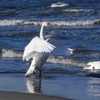 Лебеди расправляют крылья :: Маргарита Батырева