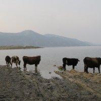 Озеро в Мингачаур. Азербайджан :: Ирина Бархатова