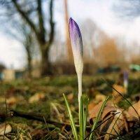 Весна решила к февралю зайти, поговорить немного о погоде.. :: Надежда