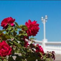 Цветы набережной Геленджика. :: Евгений