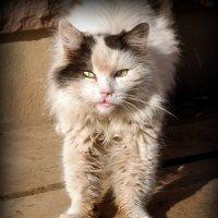 Ну чего, бандерлоги, уставились, мартовского кота не видали?:) :: Андрей Заломленков