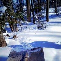 волшебный лес :: Евгений