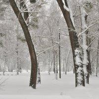 Снежно ... :: Ольга Винницкая (Olenka)