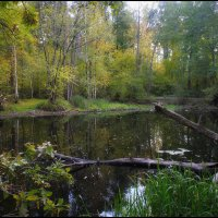 Черепашье озеро.п.Сомово :: Максим Минаков