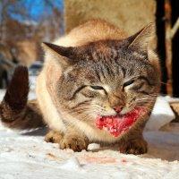 Страшней котэ весною зверя нет!:) :: Андрей Заломленков