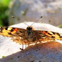 Бабочка и мурашка :: Александр Деревяшкин
