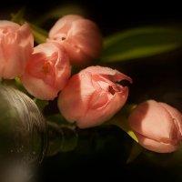 Март - время тюльпанов :: Lusi Almaz