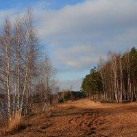 Осень в бору :: OlegVS S