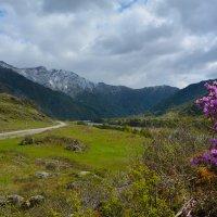 В долине Катуни. :: Валерий Медведев