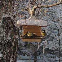 Синички зимой :: Любовь Иванова