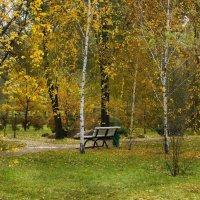 Одинокая скамья в осеннем парке. :: barsuk lesnoi