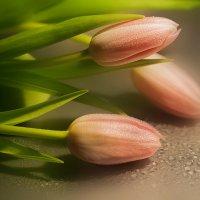 Время тюльпанов :: Lusi Almaz