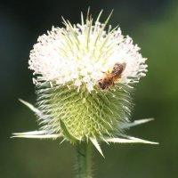 Лесные пчёлки! :: Светлана Масленникова