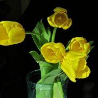 желтые тюльпаны :: НАТАЛЬЯ