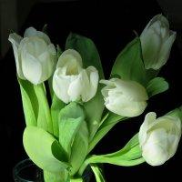белые тюльпаны :: НАТАЛЬЯ