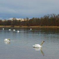 Лебединое озеро в марте... :: Galina Dzubina