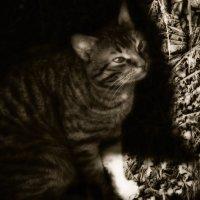 Прячась в тени... :: Вера Катан