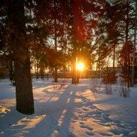 Весенний закат в лесу :: Александр Шишин