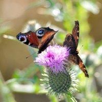 осенние бабочки... :: Андрей Вестмит