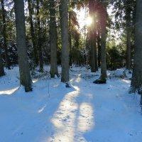 Солнечный день января :: Светлана Петошина